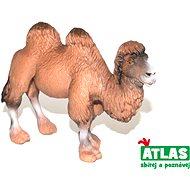 Atlas Kamel