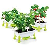 Educa Mein kleiner Garten - Erdbeere, Minze, Basilikum - Experimentier-Set