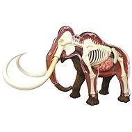 4D Mamut - Anatomisches Modell