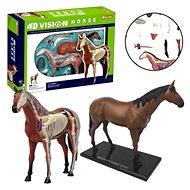4D Pferd - Anatomisches Modell
