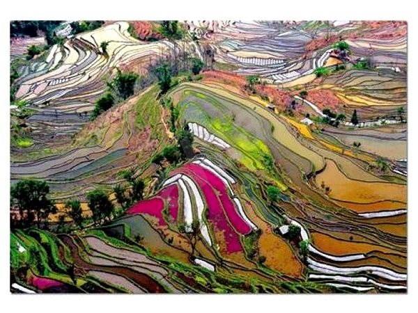 Rýžová pole Čína - Puzzle